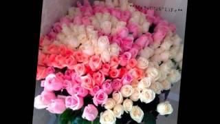 Receba as flores que eu lhe dou    Nilton Cesar