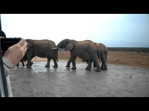 Elephants at the Addo Elephant National Park in South Africa
