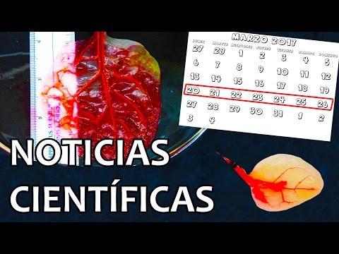 Espinacas convertidas en células del corazón | Noticias 27/3/2017