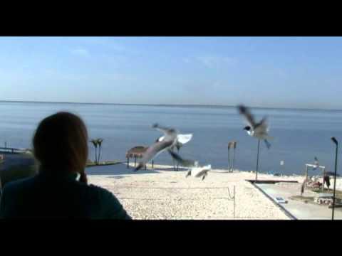 Killer Birds vs. Fay