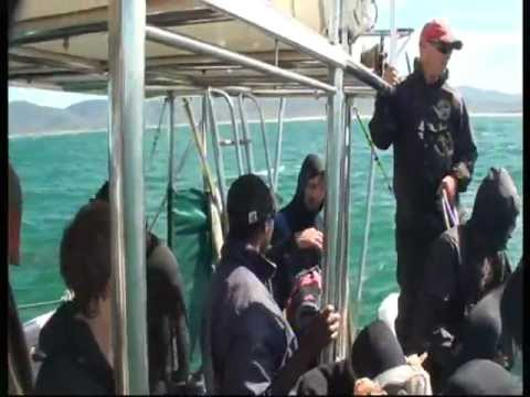 APOCALYPS TBYD: Cage Diving Shark Attack (Gansbaai, South Africa)