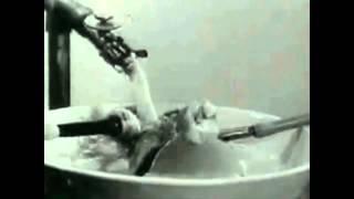 La marcha del frijól errante - Cleto