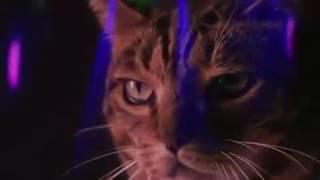 Miau mix