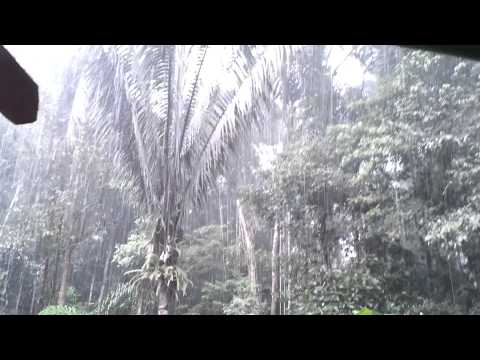Rain in the rainforest – near Tena, Ecuador