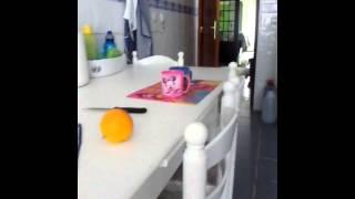 Mr.Robin- Desafio da laranja-