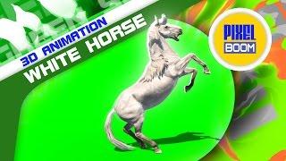 Green Screen White Horse Runs Prairie Animals - Footage PixelBoom