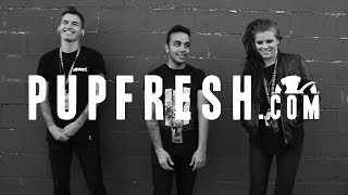 Pup On The Rise: PVRIS