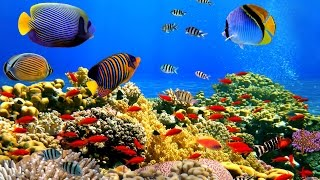 Incredible Underwater Scenes & Chillout Music