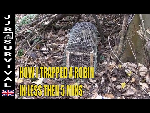 How To Trap A Robin (Accidentally)