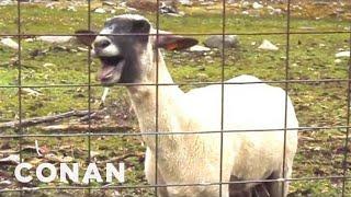 The Screaming Sheep Has Company - CONAN on TBS