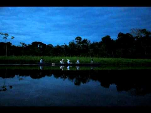 Ecuador Amazon rainforest sunset