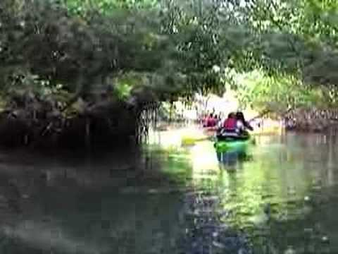 Kayaking the Mangrove canals to the bio bay Puerto Rico