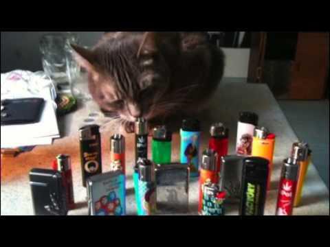 Vidéo de Jean-Michel Thiriet