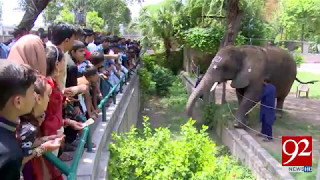 Kids favourite Suzi dies at Lahore Zoo 13-05-2017 - 92NewsHDPlus