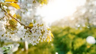 Beautiful Relaxing Music • Peaceful Piano, Cello & Guitar Music by Soothing Relaxation