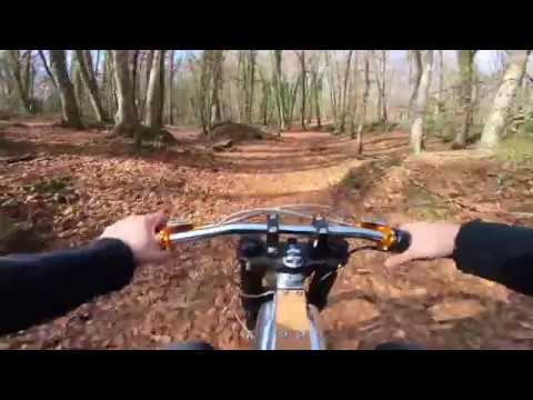 Electric Ride in the Forest