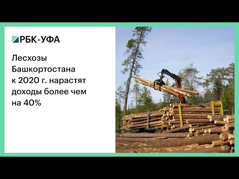 Лесхозы Башкортостана к 2020 г. нарастят доходы более чем на 40%