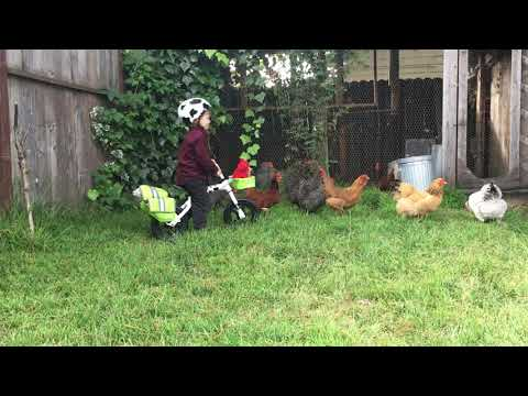 Herding Chickens with a Flip Flop Balance Bike by Yuba Bikes
