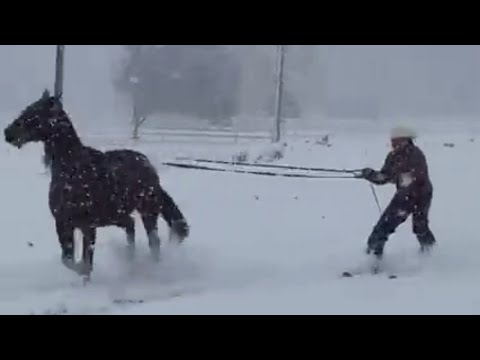 Man Skies On Snow While Being Pulled By a Horse