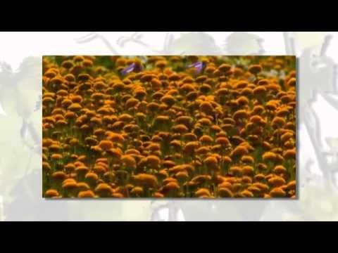 Video over de lente in de Cape Winelands, Zuid Afrika