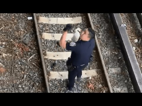 Cop Rescues Kitten From Railway Tracks