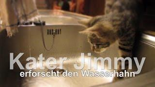 I am Jimmy, Kater Jimmy lernt den Wasserhahn kennen, little Tomcat Jimmy meets the faucet