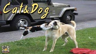 (ไร้)สารคดีสัตว์โลก # สุนัข ท้าไฝว้ แมวดำ (ขำ ๆ)