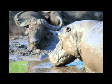 featured safari,hluhluwe Game Reserve Video