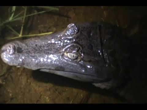 Amazon Tours Ecuador, Jungle Tours Ecuador