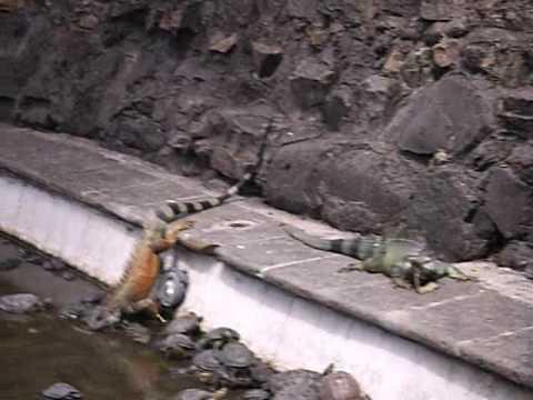 parco delle iguane