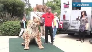 a long teeth robot tiger