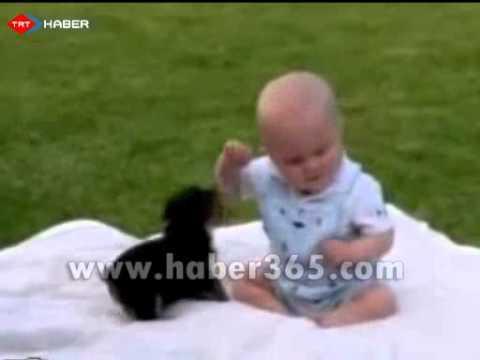 Köpekle Bebeğin Kavgası