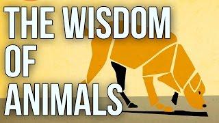 The Wisdom of Animals