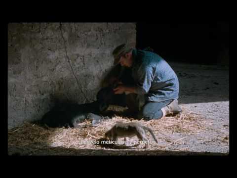 Bella y perdida - Trailer subtitulado en espa�ol (HD)