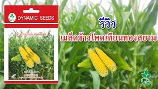 Dynamic Seeds: รีวิวเมล็ดข้าวโพดเทียนทองสยาม