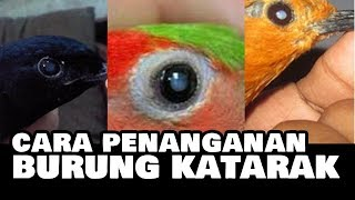 Kicau Lovebird   Kicau Suara Burung Lovebird Juara Gacor Suara Bening Full Ngekek Panjang width=