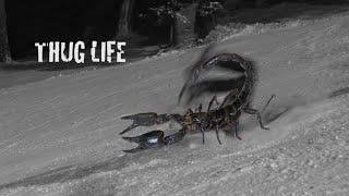 Ultimate Scorpion CRASH lv9000!!!