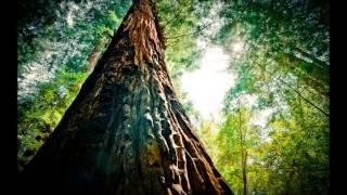 Dream Koala - Iron (Woodkid Cover Edit)