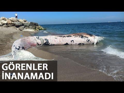 Mersin'de 10 Metre Boyunda Oluklu Balina Kıyıya Vurdu