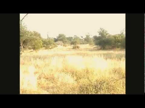 Jižní Afrika – po stopách nosorožce