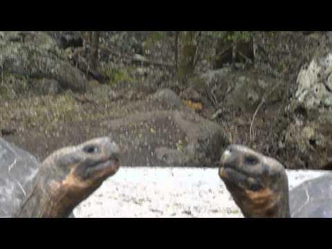 Ecuador   Galapagos   Floriana part 5
