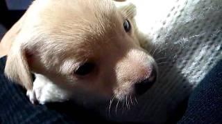 Cachorrinho chorando e fazendo biquinho
