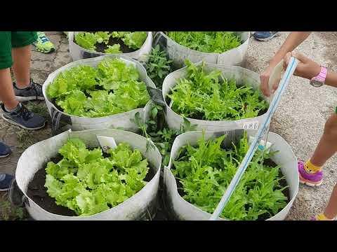 502蔬菜成長縮時攝影 - YouTube