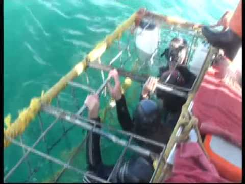 "Great White Shark Cage Diving: ""Shark Alley"" (S. Africa, 12/16/10)"