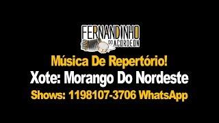 Repertório Xote - Morango Do Nordeste - Fernandinho Do Acordeon