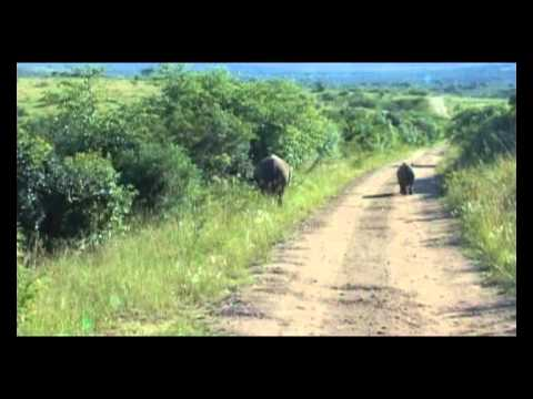 VISIT TO HLUHLUWE-UMFOLOZI GAME RESERVE KWAZULU NATAL SOUTH AFRICA March 2012