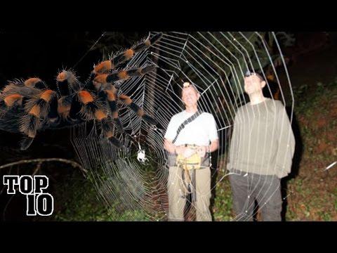 Cei mai mari paianjeni din lume