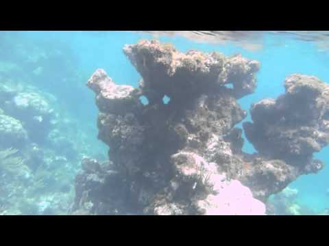 Puerto Rico Flamenco Beach Snorkel.m4v