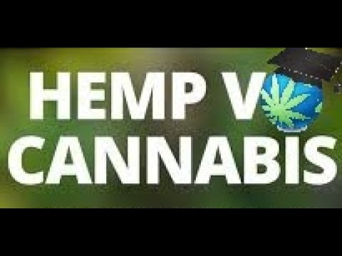 Hemp V. Marijuana - comparison and difference