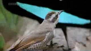 Weird Bird of Paradise
